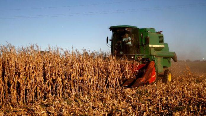 Producción de maíz