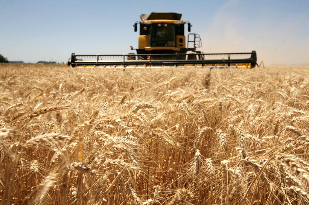 Resultado de imagen para produccion de trigo