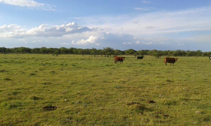 Sociedad Rural de San Pedro