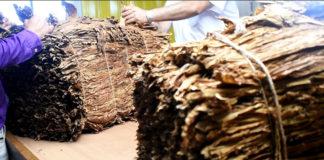 Producción tabacalera