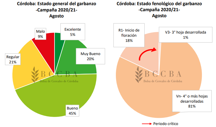 Estado del garbanzo en Córdoba