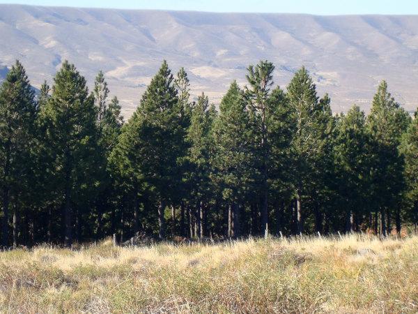 Forestación