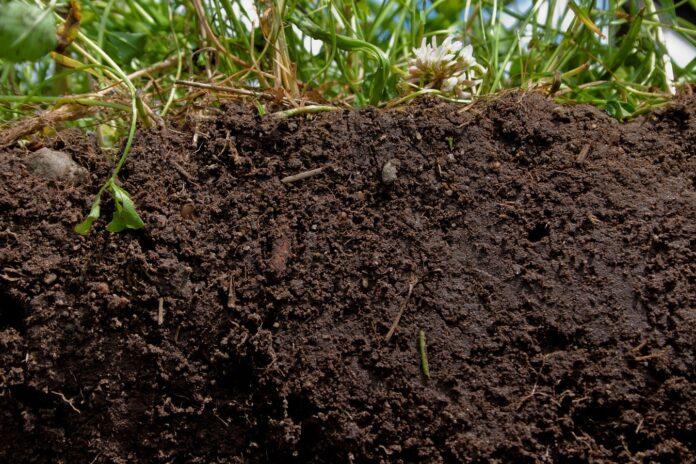 microbiología de los suelos