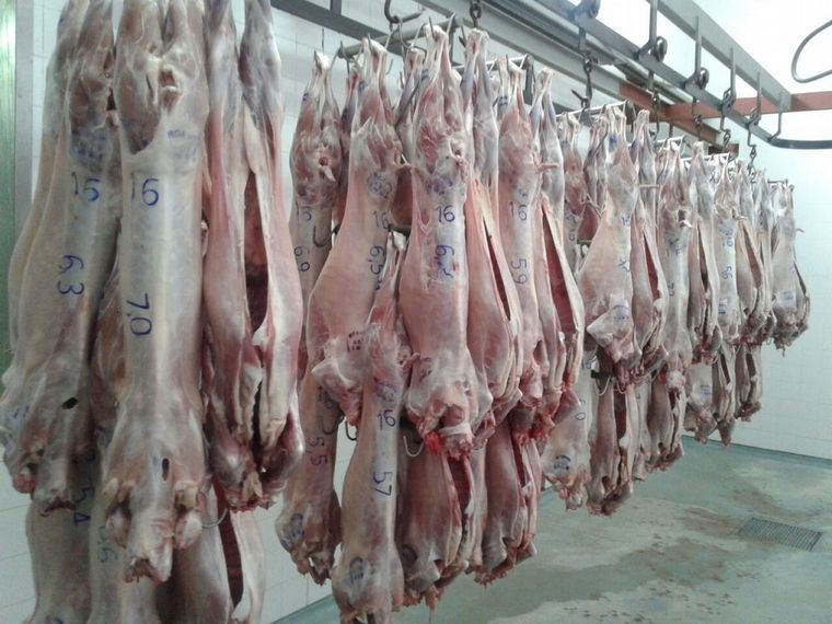 carne caprina