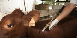 vacuna antiaftosa