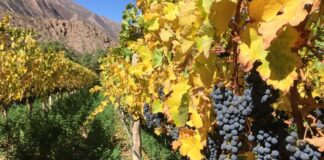 PROVIAR productores vitivinícolas
