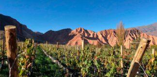 Salta- vinos de gran altura