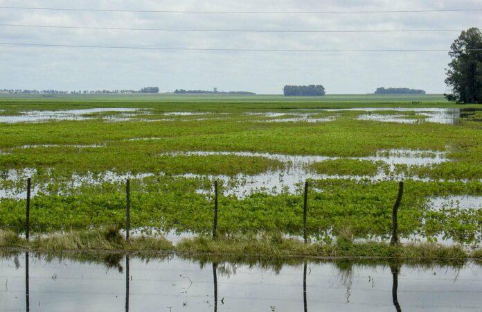 inundaciones malezas