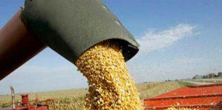 Restricciones a la exportación de maíz