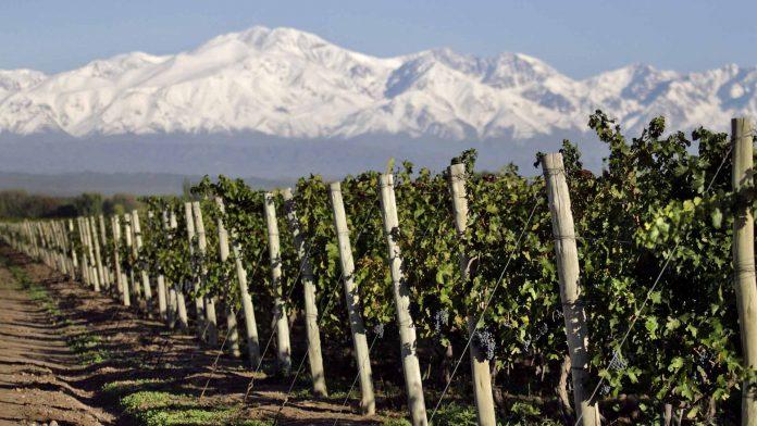 suelos salinos en vinos y viñedos