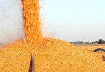 suspensión de las exportaciones de maíz