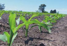 campaña agrícola