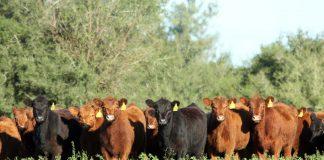 Exportación de genética bovina