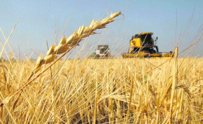 exportaciones de trigo