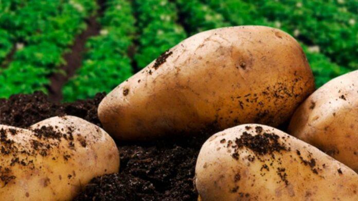 Agricultura Positiva