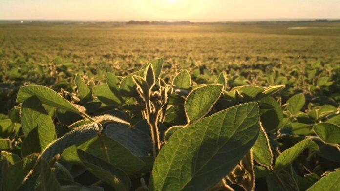 agricultura a gran escala- impacto ambiental
