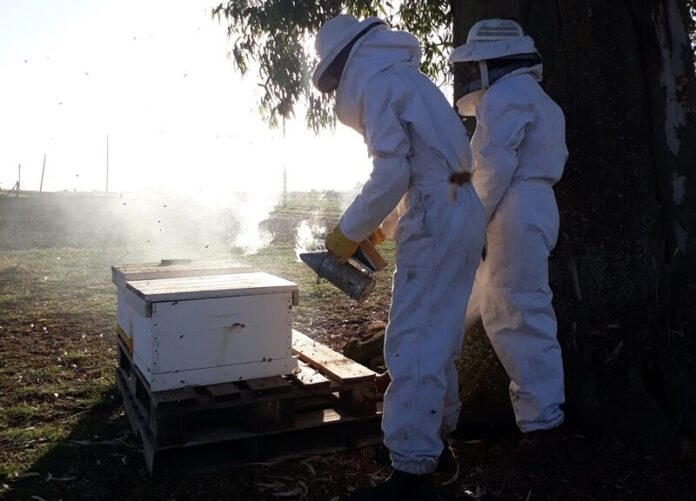 red de apicultoras