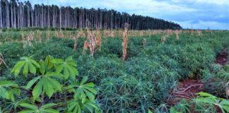 tierras forestales