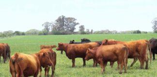 garrapata del bovino