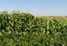 suelos- nutrientes