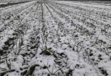 Nieve en Córdoba