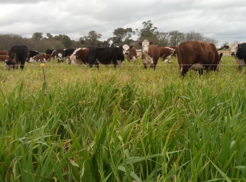 agroecología y bajos insumos
