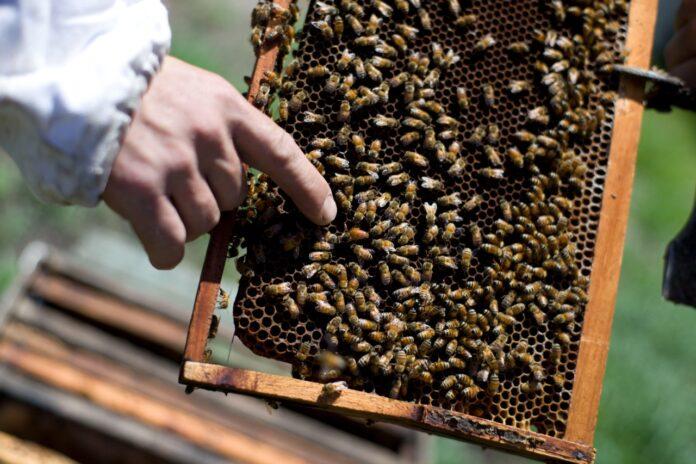 apicultura, retenciones economías regionales