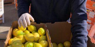 exportación de frutas frescas