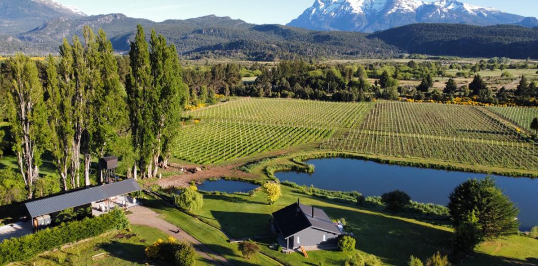 vinos patagónicos