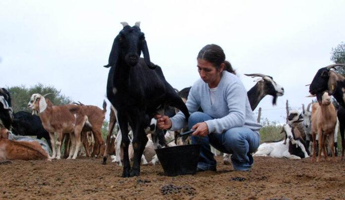 producción artesanal de lácteos