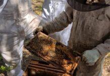 santa fe apicultura