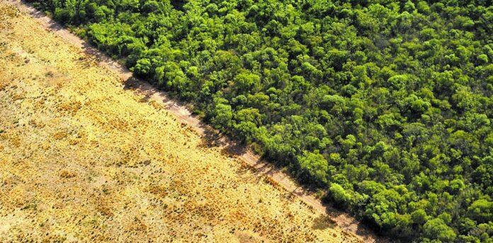 fao deforestación