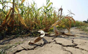 sequía Santiago del Estero