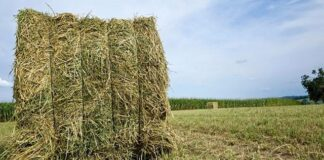 forraje emergencia agropecuaria